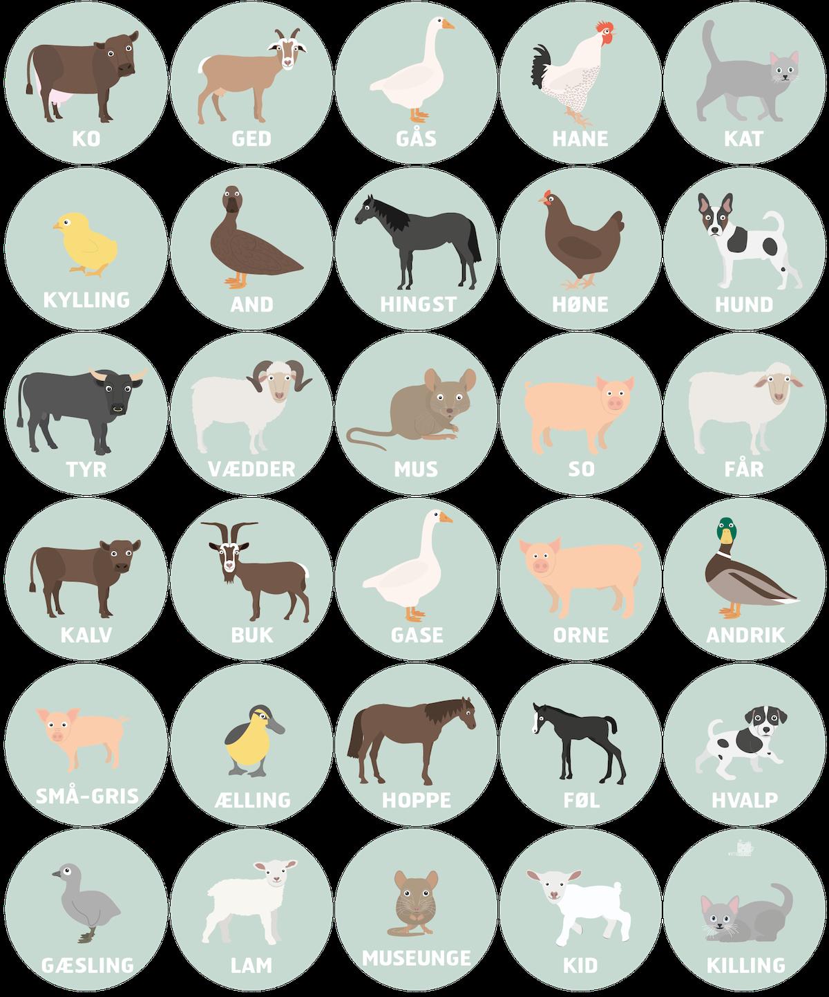 bondegaardsdyr-gulvfolie-gulvklistermaerker-mutedesign-sprogstimulering-sprogudvikling-boerns-tidlige-sprog-tidlig-litteracy-visuelle-laringgsmiljoeer-mutedesign-folie-til-doer-30-stk-oe25
