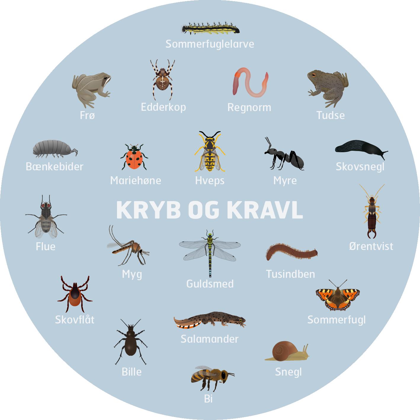 Kryb-og-kravl-insekter-haven-legeplads-mutedesign